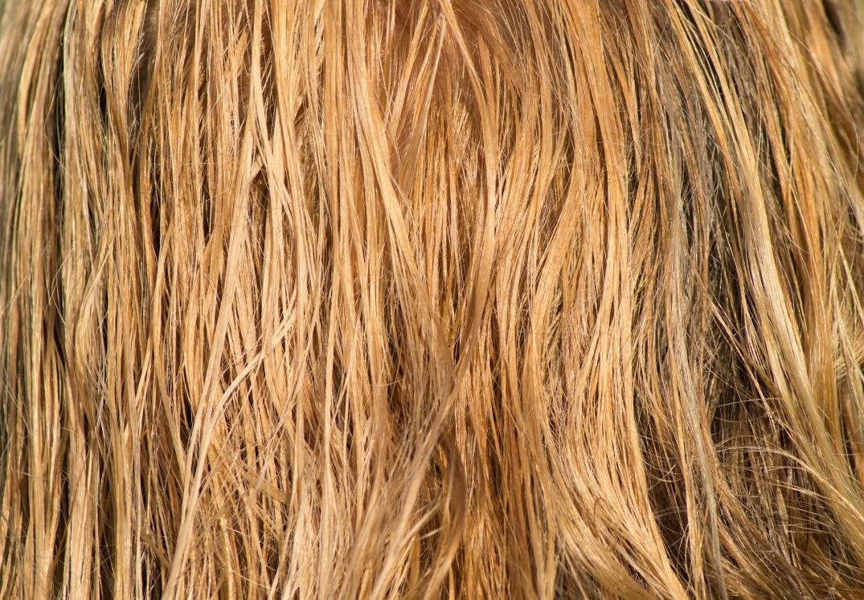 hair-3419148_1920