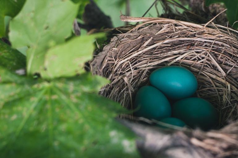 nest-843231_1920
