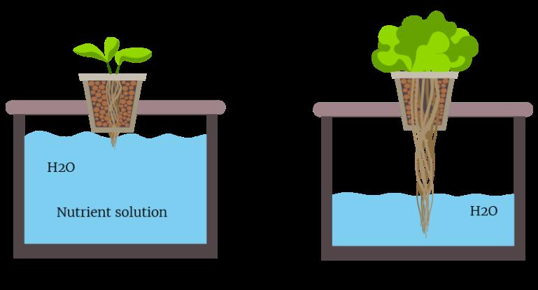 The-Kratky-method-system